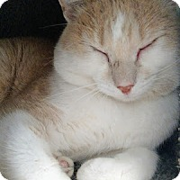 Adopt A Pet :: Glenn - Chaska, MN