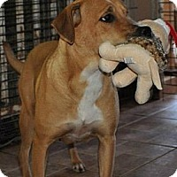Adopt A Pet :: Carly - Miami, FL