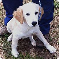 Adopt A Pet :: Baxter - Cheshire, CT