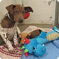 Adopt A Pet :: Bly - Only $95 adoption! - Litchfield Park, AZ