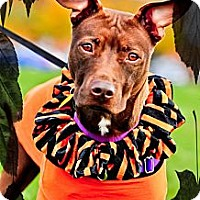 Adopt A Pet :: Rada - Sylvania, OH