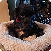 Adopt A Pet :: Sunshine - West Deptford, NJ