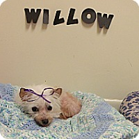 Adopt A Pet :: Willow - Muskegon, MI