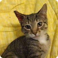 Adopt A Pet :: Tessa - Colmar, PA