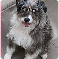 Adopt A Pet :: Maddie - Wyanet, IL