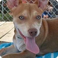 Adopt A Pet :: Auggie - Athens, GA
