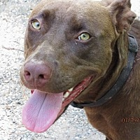 Adopt A Pet :: Gracie - Mount Ida, AR
