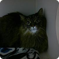 Adopt A Pet :: Preston - Caistor Centre, ON