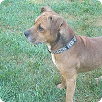 Adopt A Pet :: Victor - SOUTHINGTON, CT