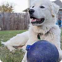 Adopt A Pet :: Sebastian  ON HOLD - Tulsa, OK