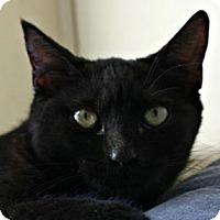 Adopt A Pet :: Aretha - Richland Hills, TX
