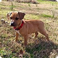 Adopt A Pet :: Lester - Charlotte, NC