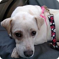 Adopt A Pet :: Frannie - Liberty, MO