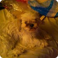 Adopt A Pet :: Rosie 2015 - Rochester, MN