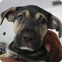 Adopt A Pet :: Mia ~ Puppy! - St Petersburg, FL