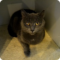 Adopt A Pet :: Viola - Broadway, NJ