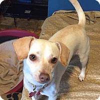 Adopt A Pet :: Vivian - Fairfield, OH