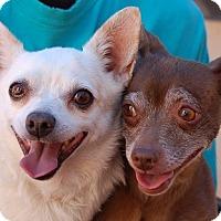 Adopt A Pet :: Mariella - Las Vegas, NV