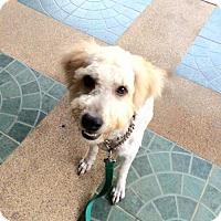 Adopt A Pet :: 'MHEE' - Agoura Hills, CA