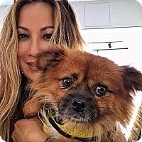 Adopt A Pet :: Harley2 - Sherman Oaks, CA