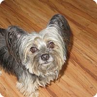 Adopt A Pet :: Sweet Pea - Studio City, CA