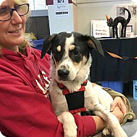 Cattle Dog/Terrier (Unknown Type, Medium) Mix Dog for adoption in Sterling Heights, Michigan - Buster