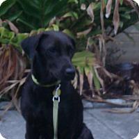 Adopt A Pet :: Mama Bella - Brattleboro, VT