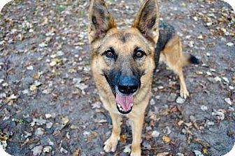 German Shepherd Dog Dog for adoption in Morrisville, North Carolina - Liberty
