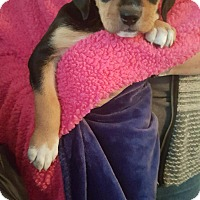 Adopt A Pet :: Sammi - Orland Park, IL