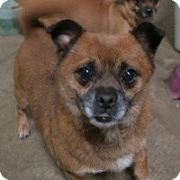 Adopt A Pet :: Shorty - McKenna, WA