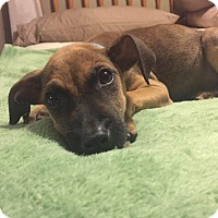 Adopt A Pet :: Lando - Middlesex, NJ