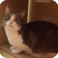 Adopt A Pet :: Holly - Modesto, CA