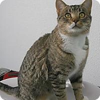 Adopt A Pet :: Giles - Colorado Springs, CO