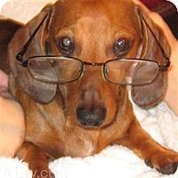 Adopt A Pet :: MORDIE - Portland, OR