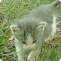 Adopt A Pet :: Buzz Lightyear - Columbus, OH