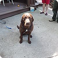 Adopt A Pet :: Smokey - Chewelah, WA