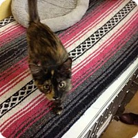 Adopt A Pet :: Maggie - Lake Charles, LA