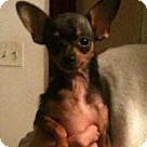 Adopt A Pet :: Delilah Grace
