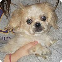 Adopt A Pet :: Bruce Lee - Greenville, RI