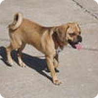 Adopt A Pet :: Rocco - Cleveland, OH