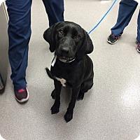 Adopt A Pet :: Valentina - Cumming, GA