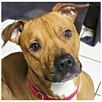 Adopt A Pet :: Charlie - Forked River, NJ