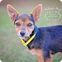 Adopt A Pet :: Ellie - Fort Valley, GA
