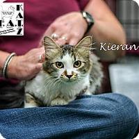 Adopt A Pet :: Kieran - Albuquerque, NM