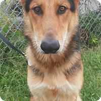 Adopt A Pet :: Rebel - Louisville, KY