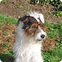 Adopt A Pet :: Pier - Tumwater, WA