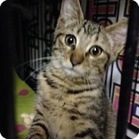 Adopt A Pet :: Cookie - East Brunswick, NJ