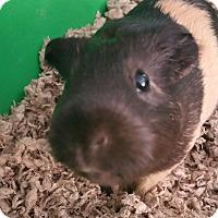 Adopt A Pet :: Keleka - Fullerton, CA