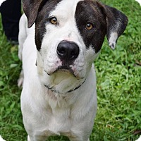 Adopt A Pet :: Drake - Ball Ground, GA