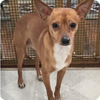 Adopt A Pet :: Hector - Avon, NY